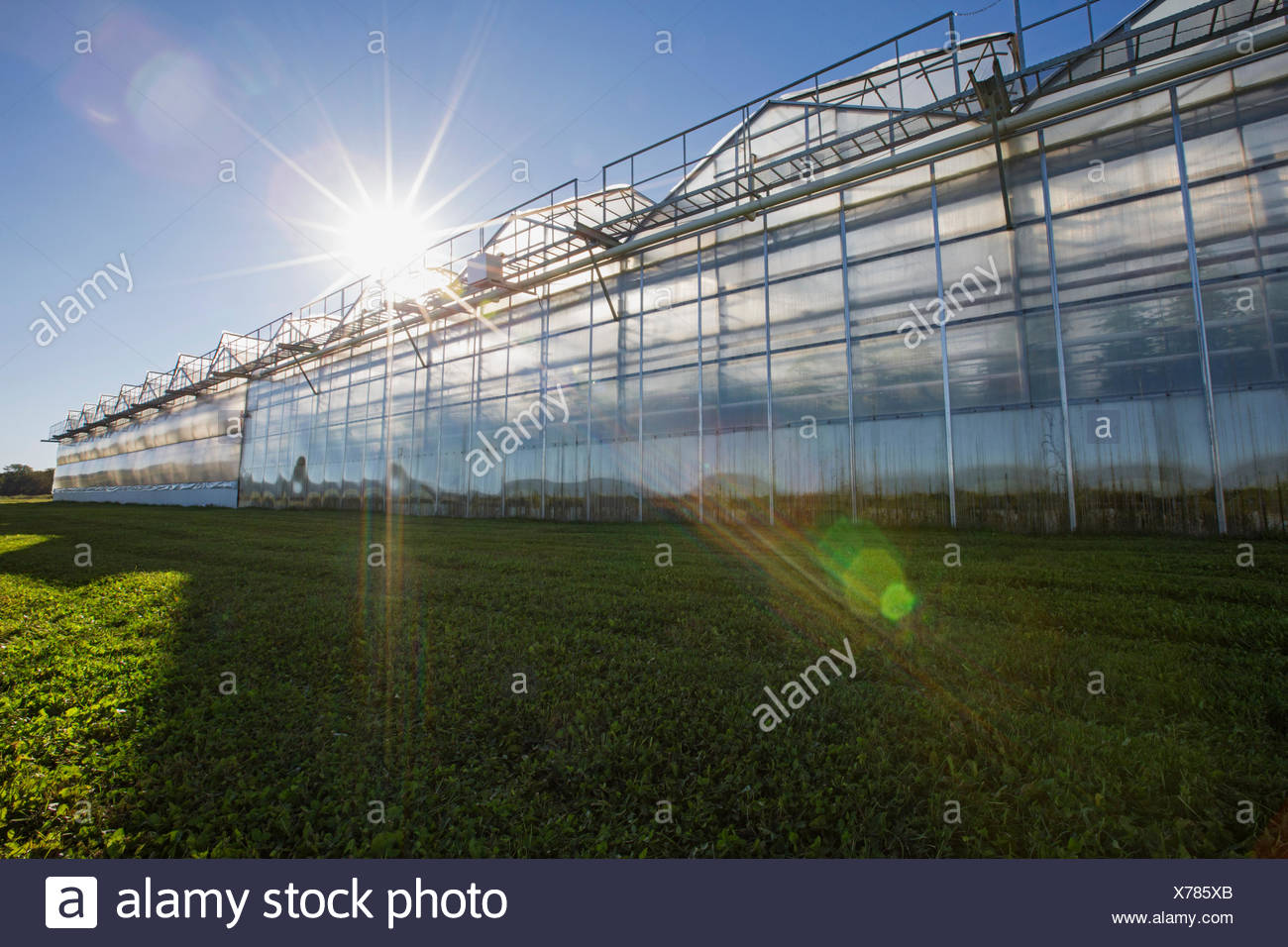 Sun shining over greenhouses - Stock Image