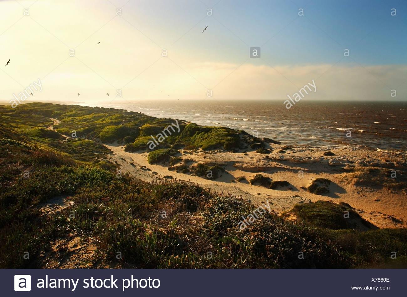 Rocky seashore - Stock Image