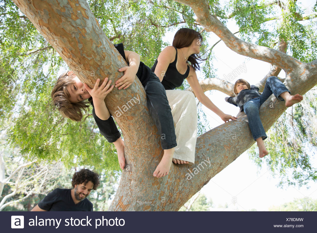 Family with two boys climbing on park tree - Stock Image