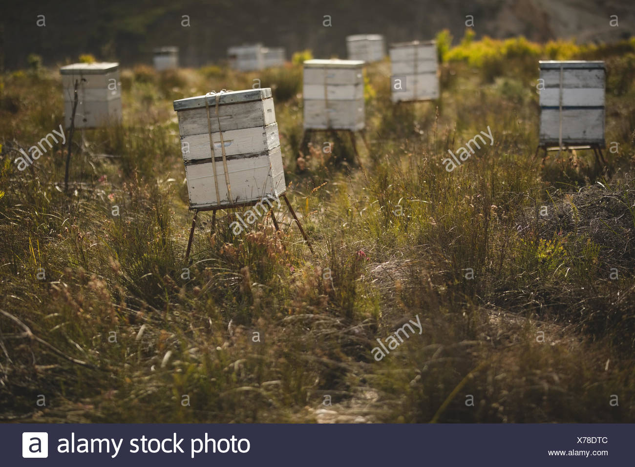 Beehives on grassy field at apiary - Stock Image