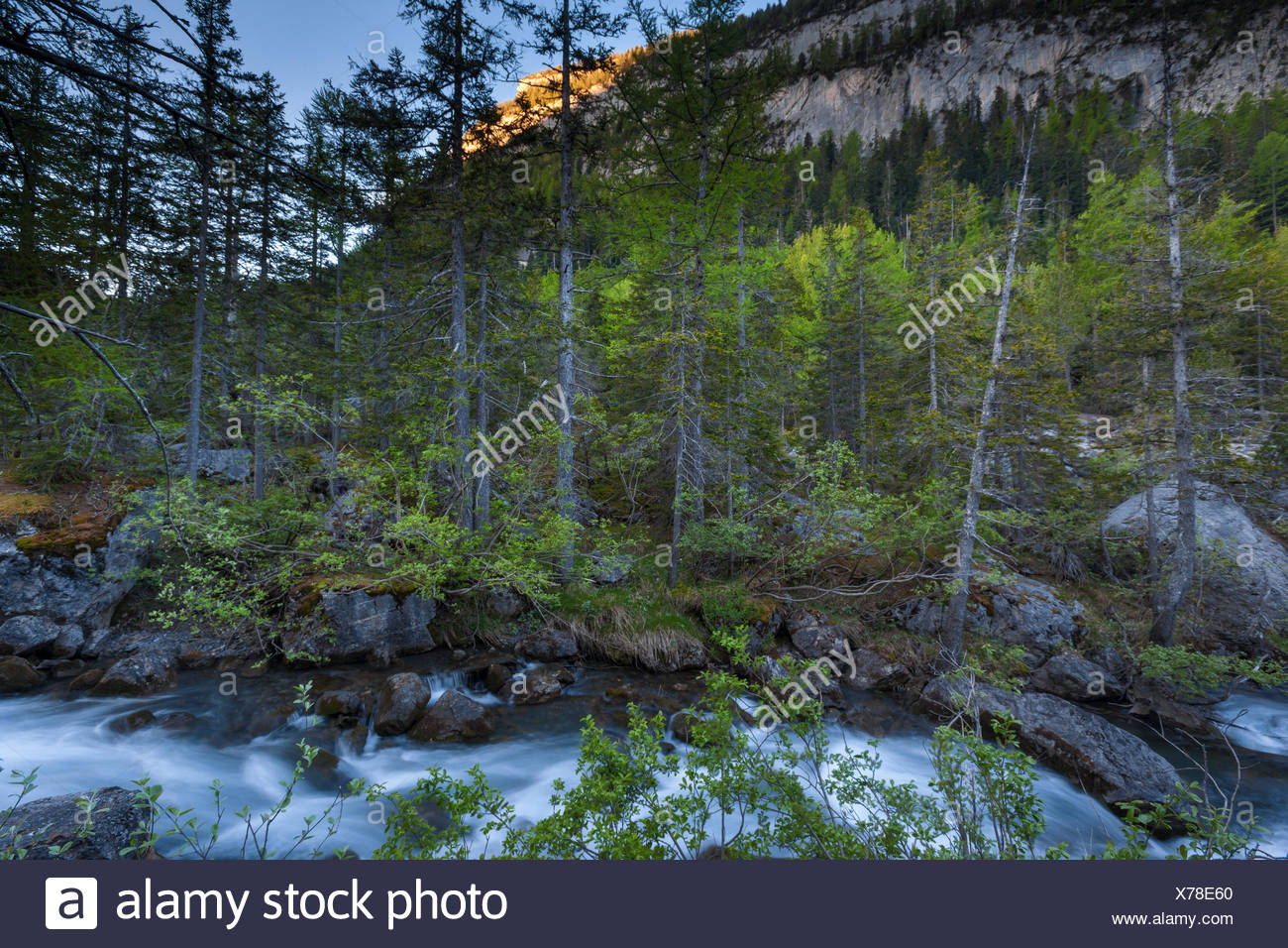 Primeval forest, forest, Derborence, Switzerland, Europe, canton, Valais, brook - Stock Image