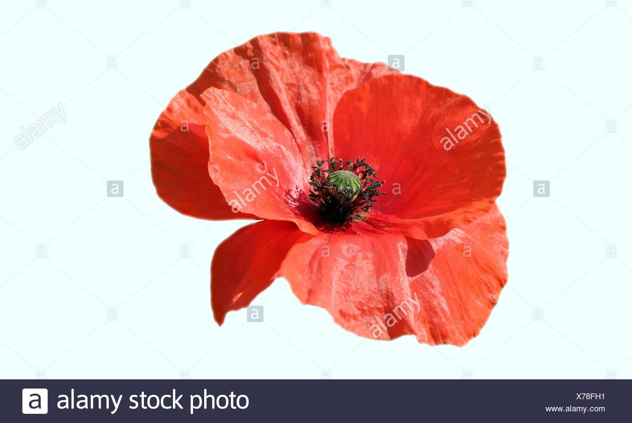 optional flower plant - Stock Image