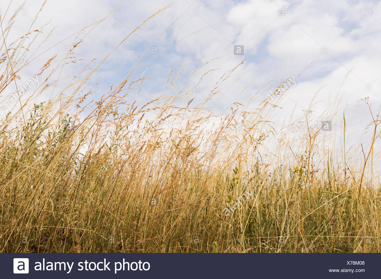 Plants growing against cloudy sky - Stock Image