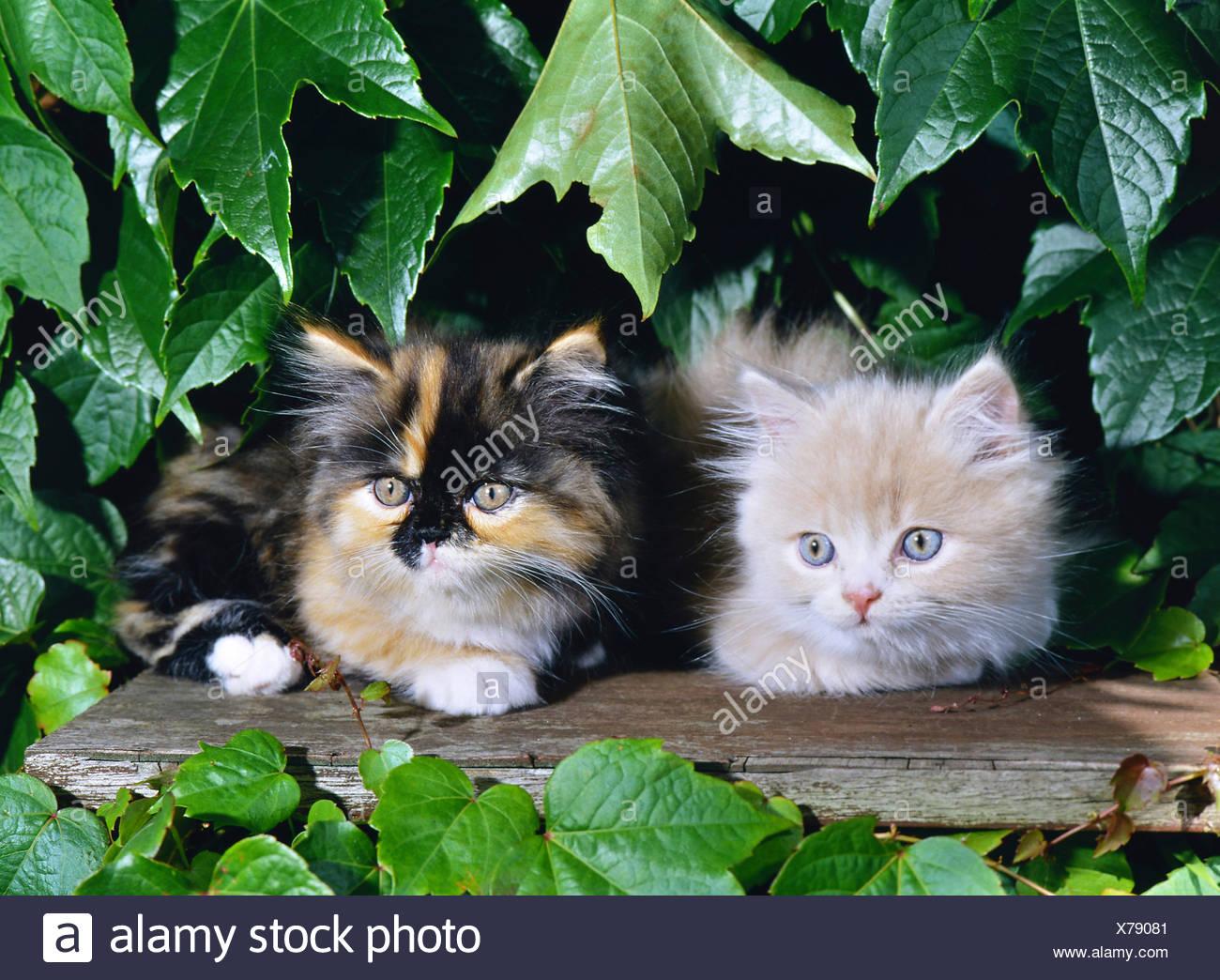 Cat Baby Kitten Angora Kittens Stock Photos Cat Baby Kitten Angora