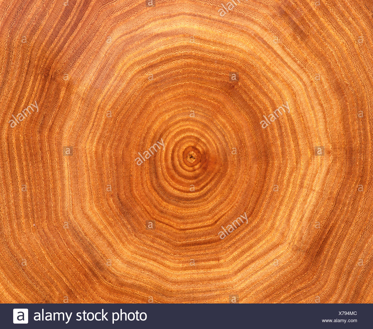 Tree trunk cross-section: tree rings Stock Photo