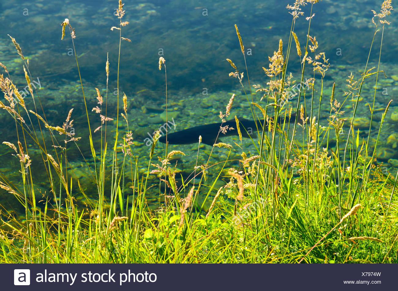 Cruising Trout Spring Creek - Stock Image