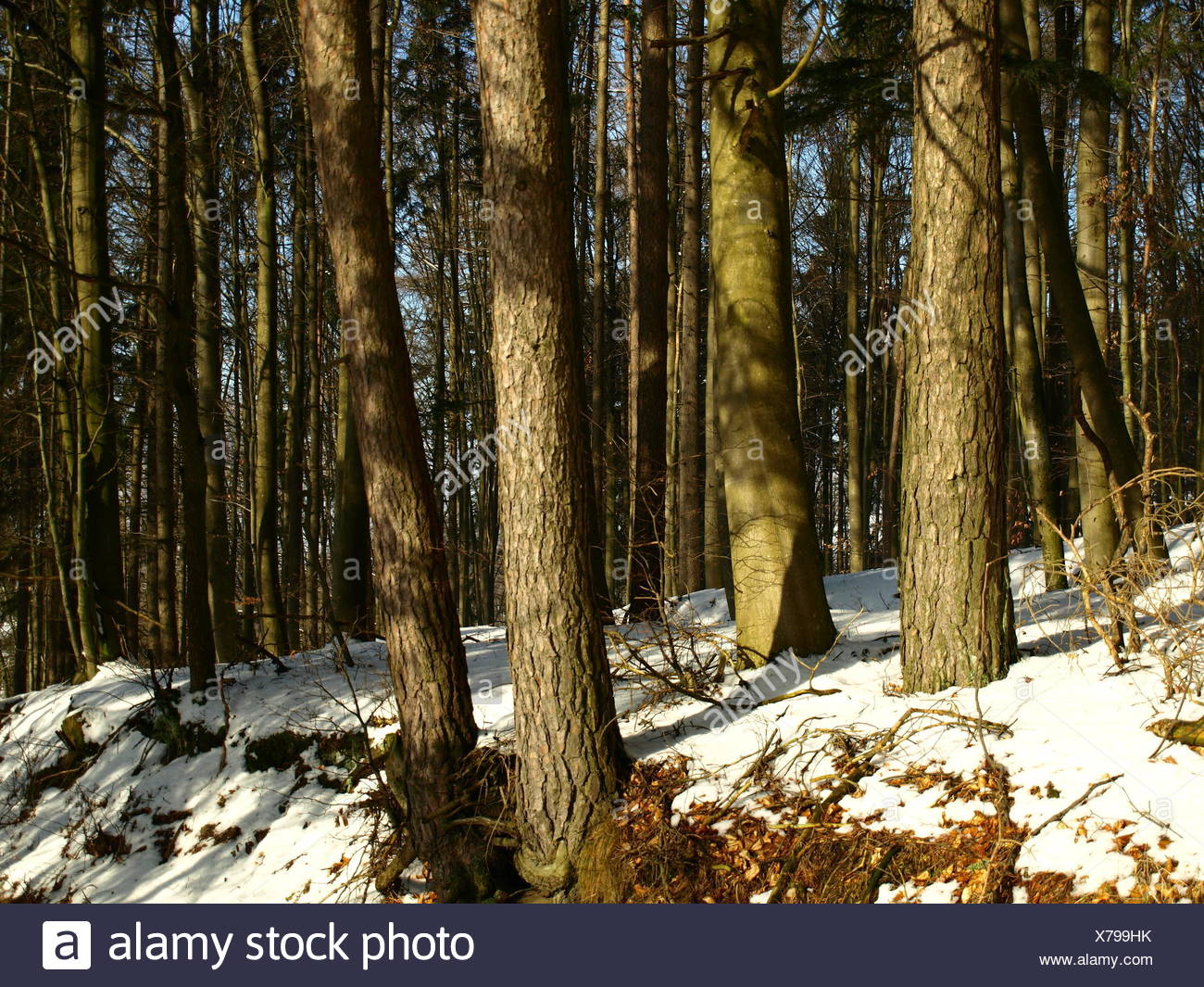 in mixed forest Stock Photo