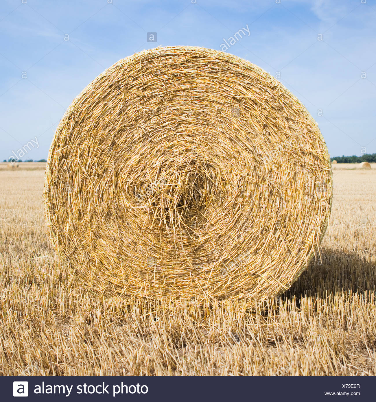 Big hay bale on a field - Stock Image