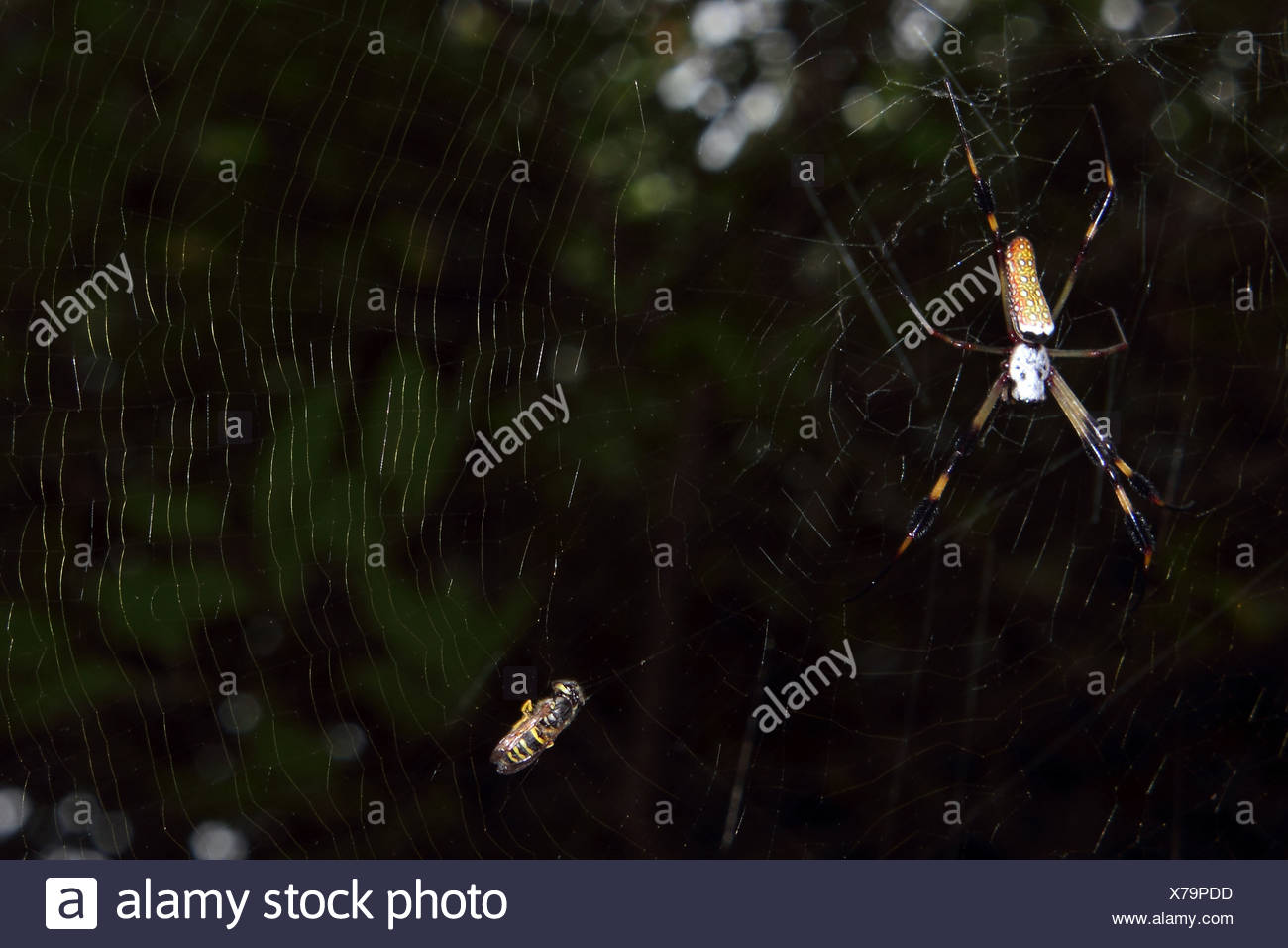 Spider and Prey - Stock Image