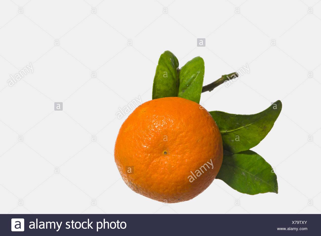 Frisch gepflückte Mandarinen mit Laub Stock Photo