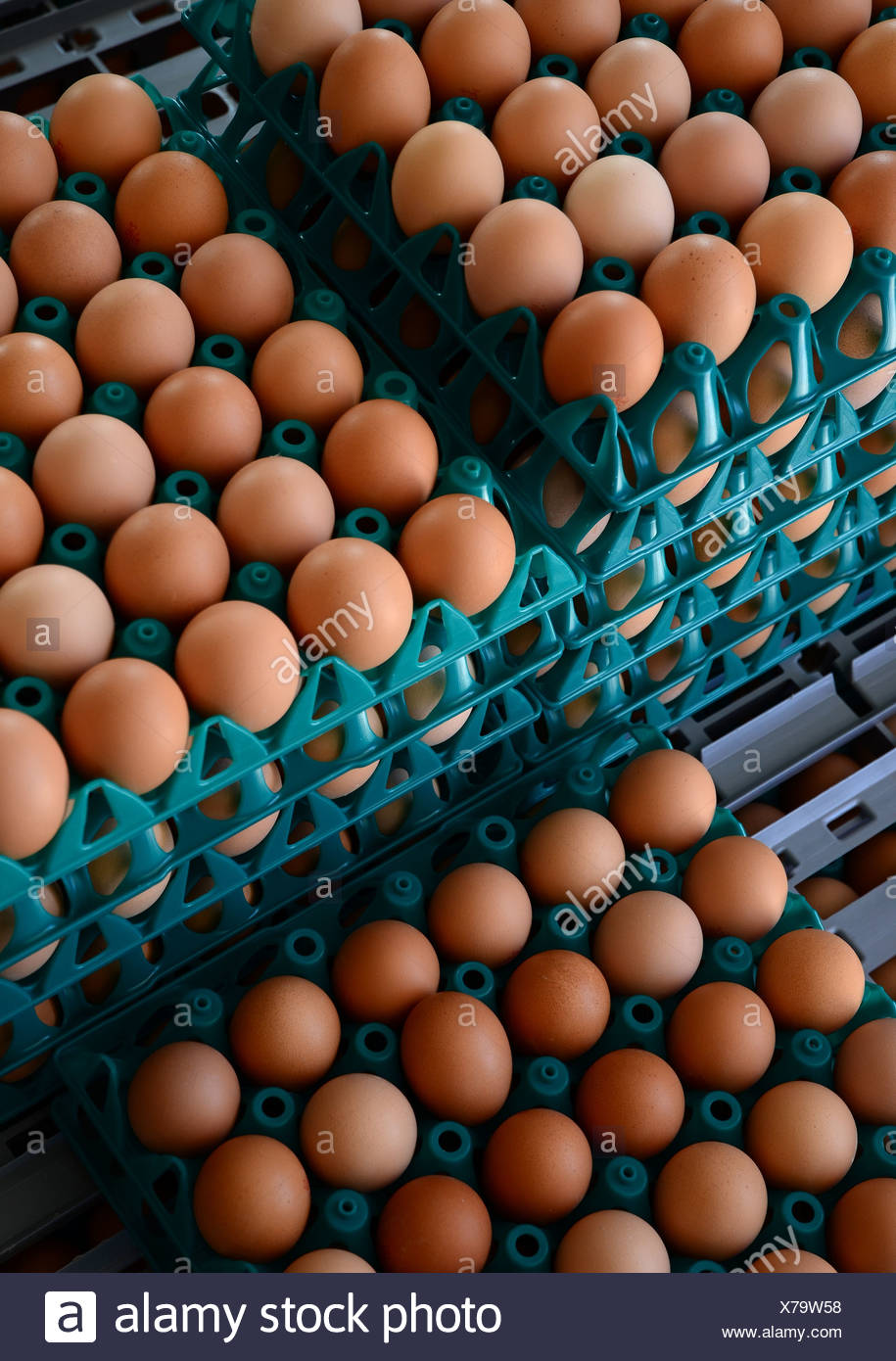 Eggs ready for transport on a poultry farm - Stock Image