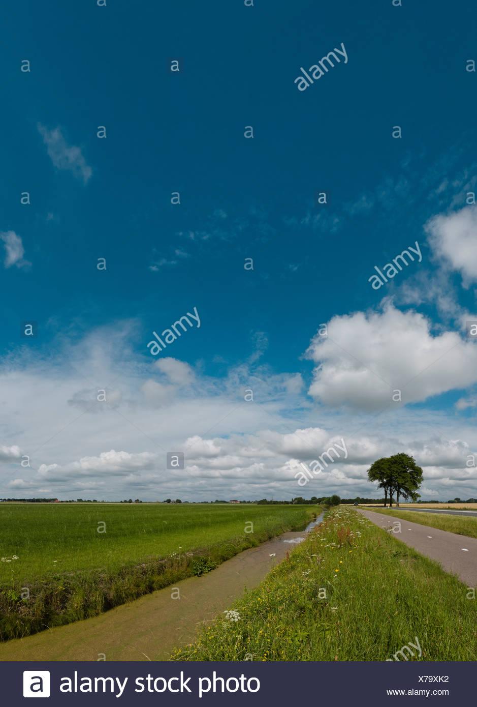 Netherlands, Europe, Holland, Noordbeemster, Polder, De Beemster, landscape, field, meadow, summer, - Stock Image