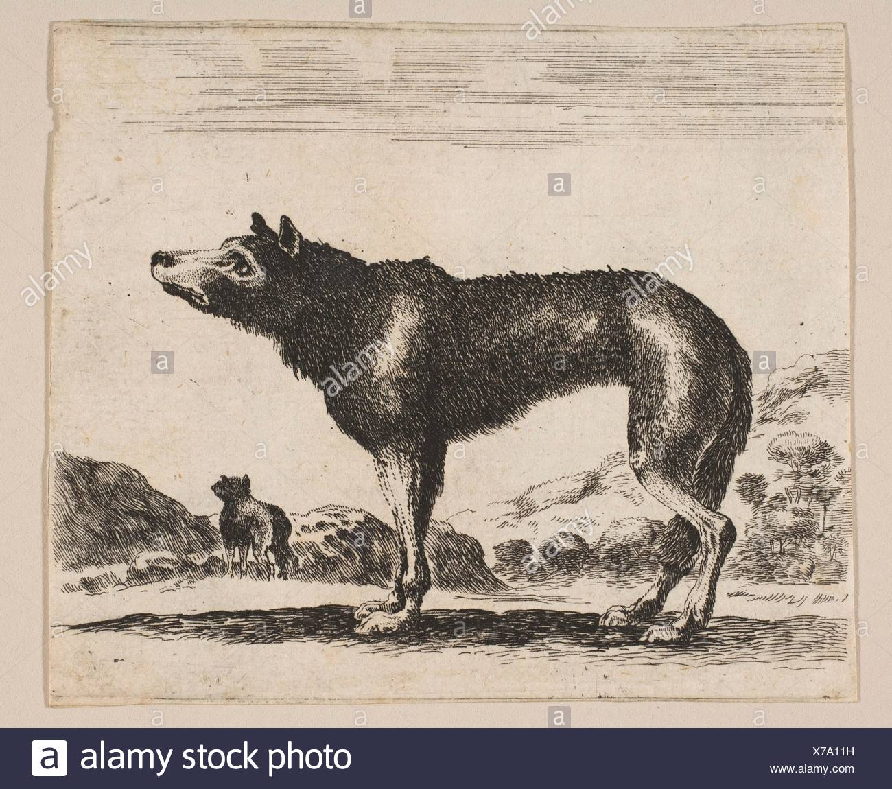Plate 20: wolf, from 'Various animals' (Diversi animali). Series/Portfolio: 'Various animals' (Diversi animali); Printmaker: Anonymous, 17th century; - Stock Image