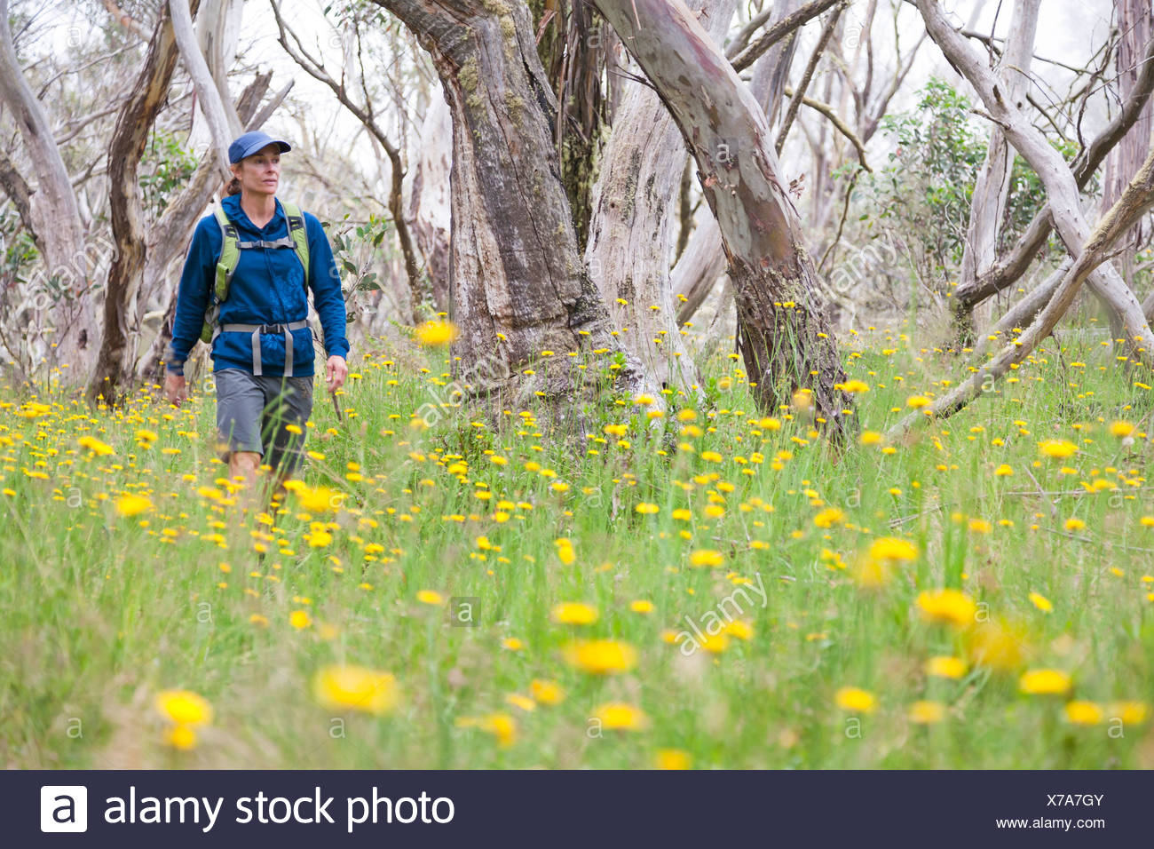 A woman is hiking in the Alpine National Park, Victoria, Australia. Stock Photo
