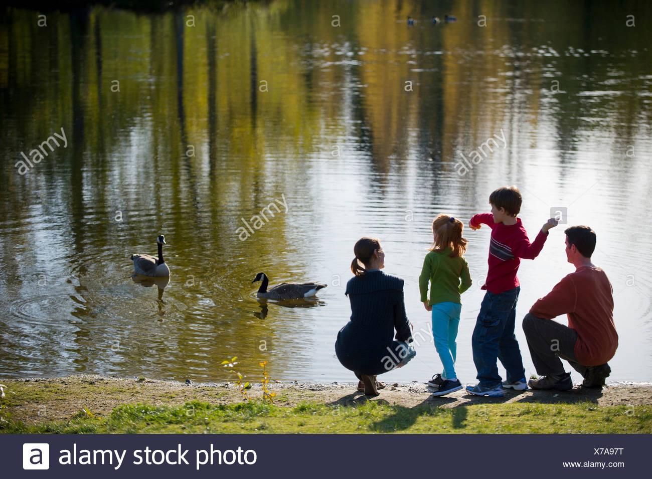 Family in park feeding ducks - Stock Image