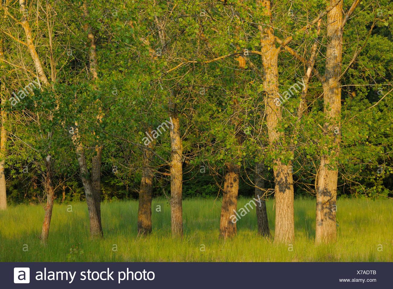 delta white forest