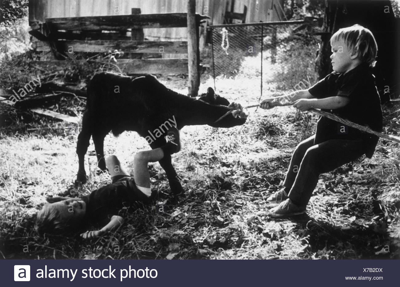 Young boy trying to pull a calf with a rope tied around its neck - Stock Image