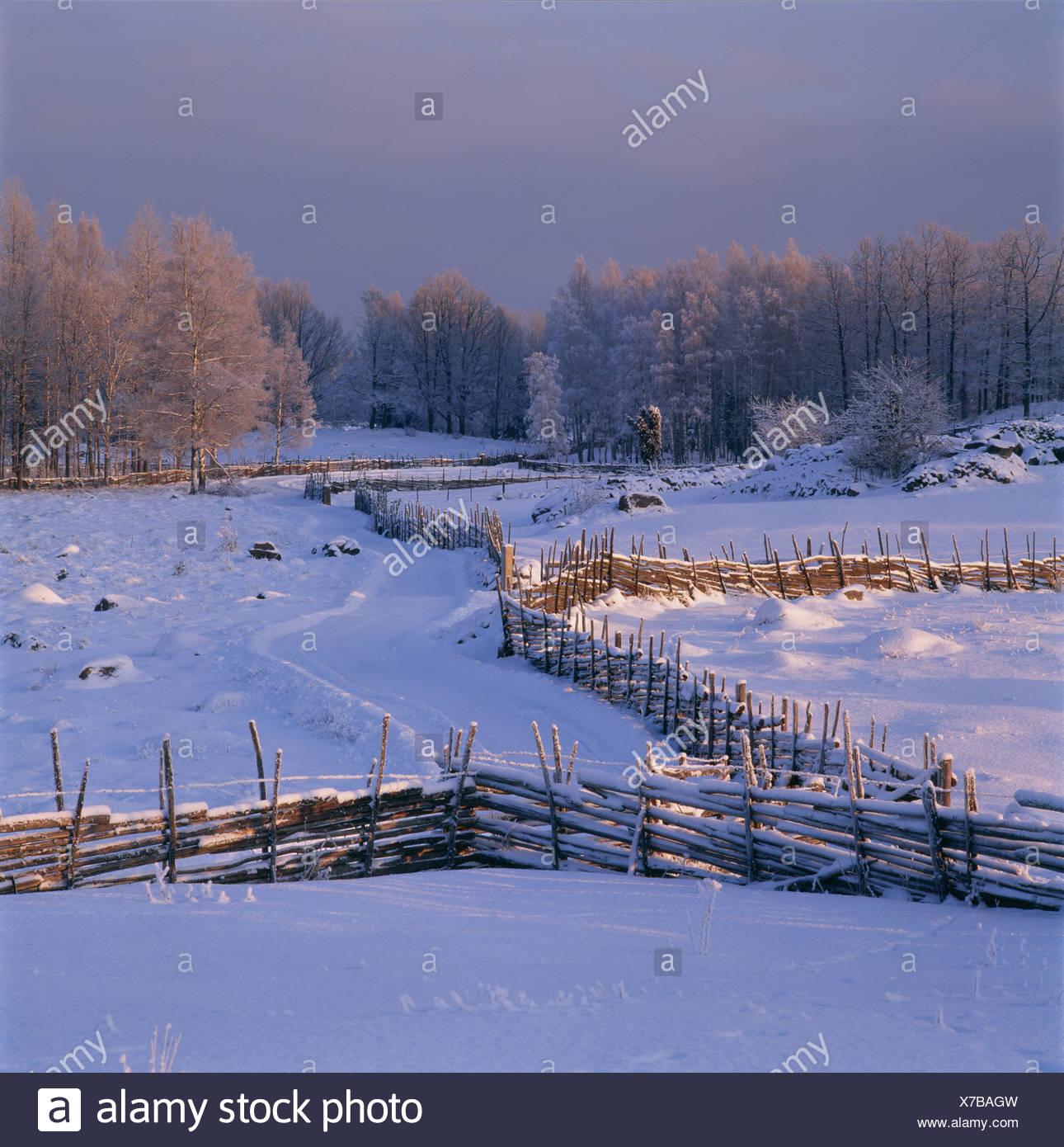 Snow-covered pastureland, Smaland, Sweden. - Stock Image