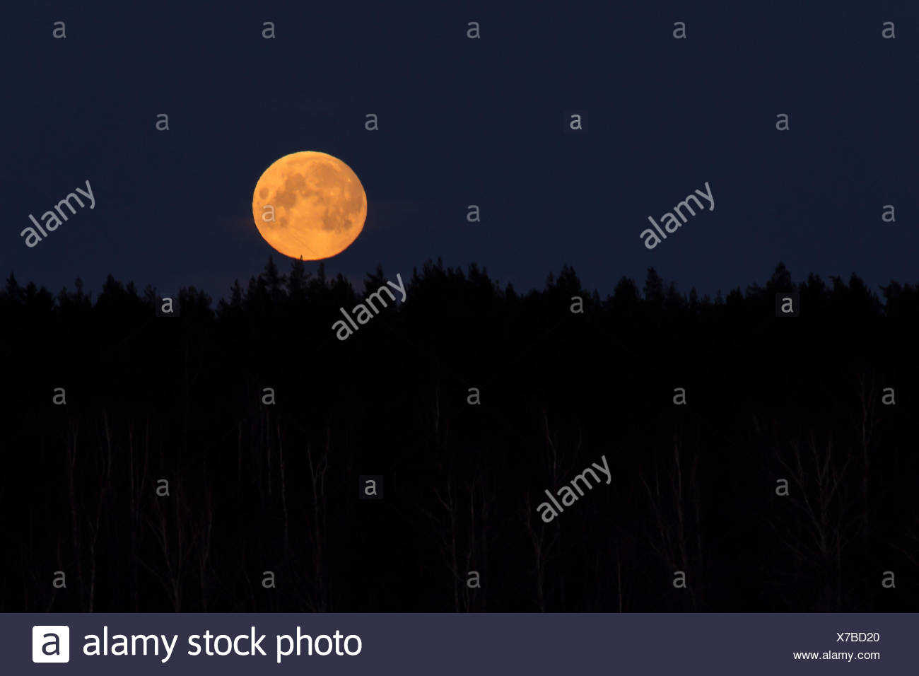 Full moon shines in morning sky - Stock Image