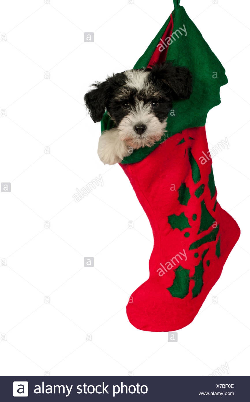 Christmas Stocking Hanging Cut Out Stock Images & Pictures - Alamy