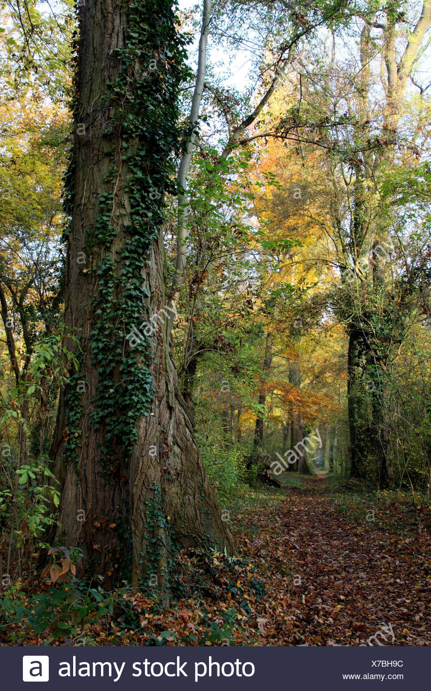 riparian forest, forest way, autumn - Stock Image