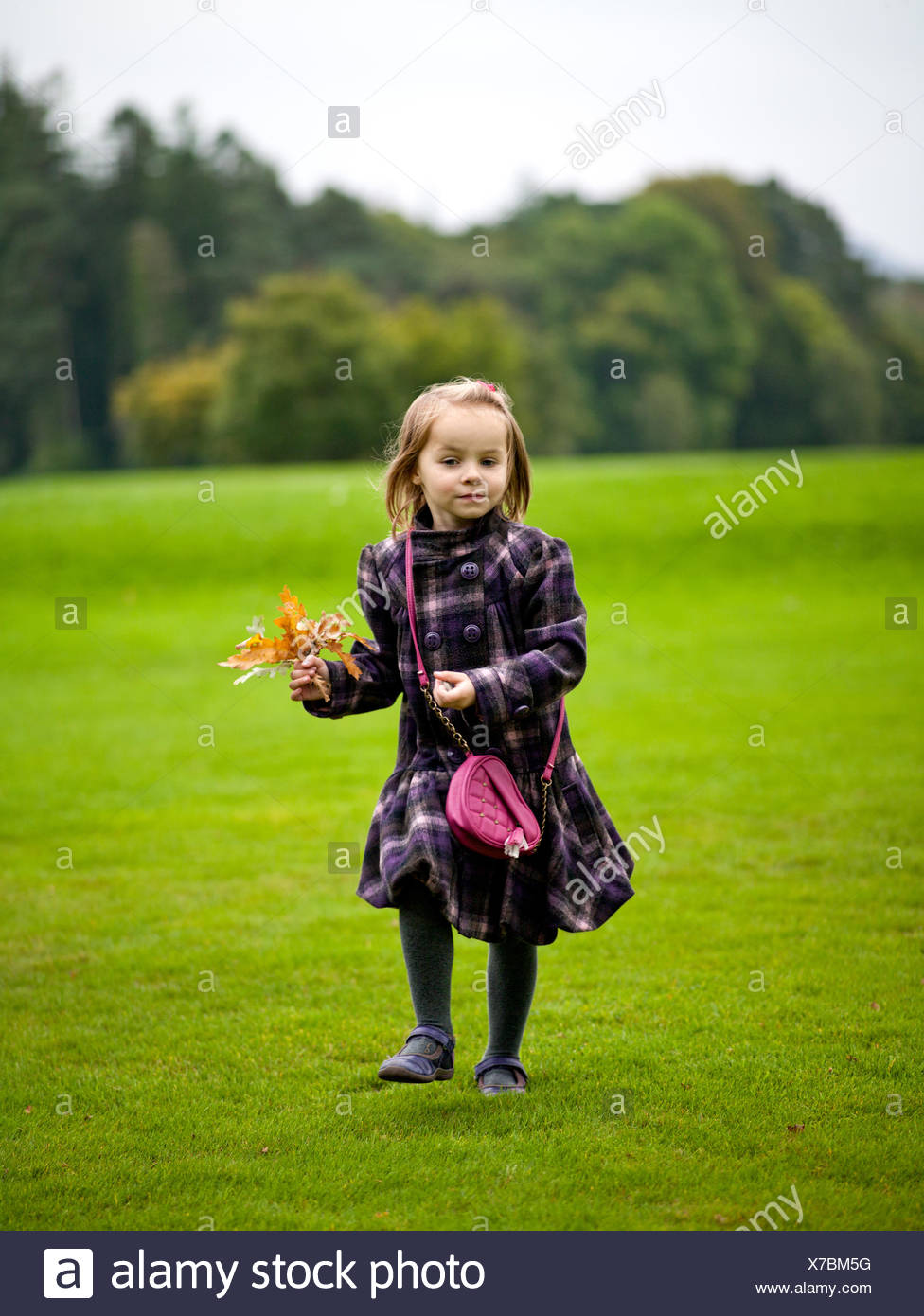 Girl (2-3) holding autumn leaves standing in meadow Stock Photo