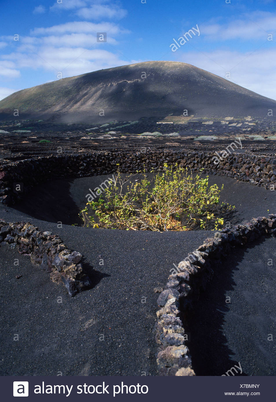 Dryland agriculture on lava, volcanic landscape at La Geria, Lanzarote, Canary Islands, Spain, Europe Stock Photo