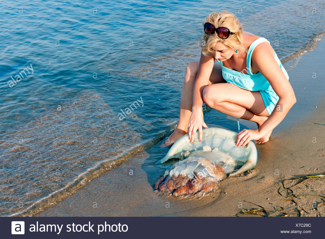 young woman try to help the big blue jellyfish throw the Japanese sea, Vladivostok, Russia. - Stock Image