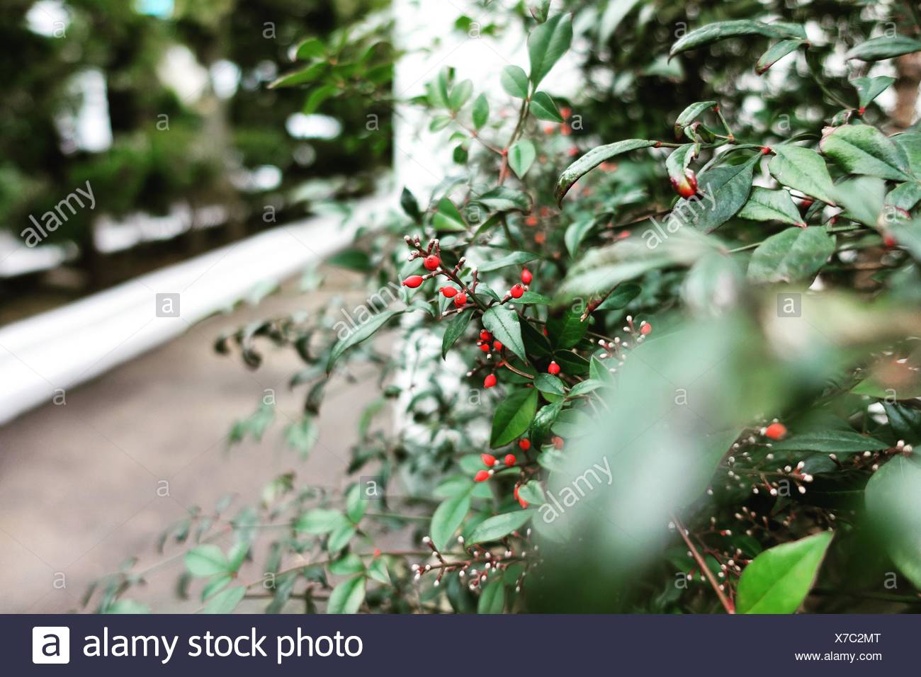 Plants At Back Yard - Stock Image