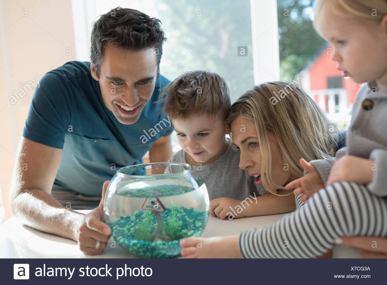 Young family watching goldfish in bowl - Stock Image