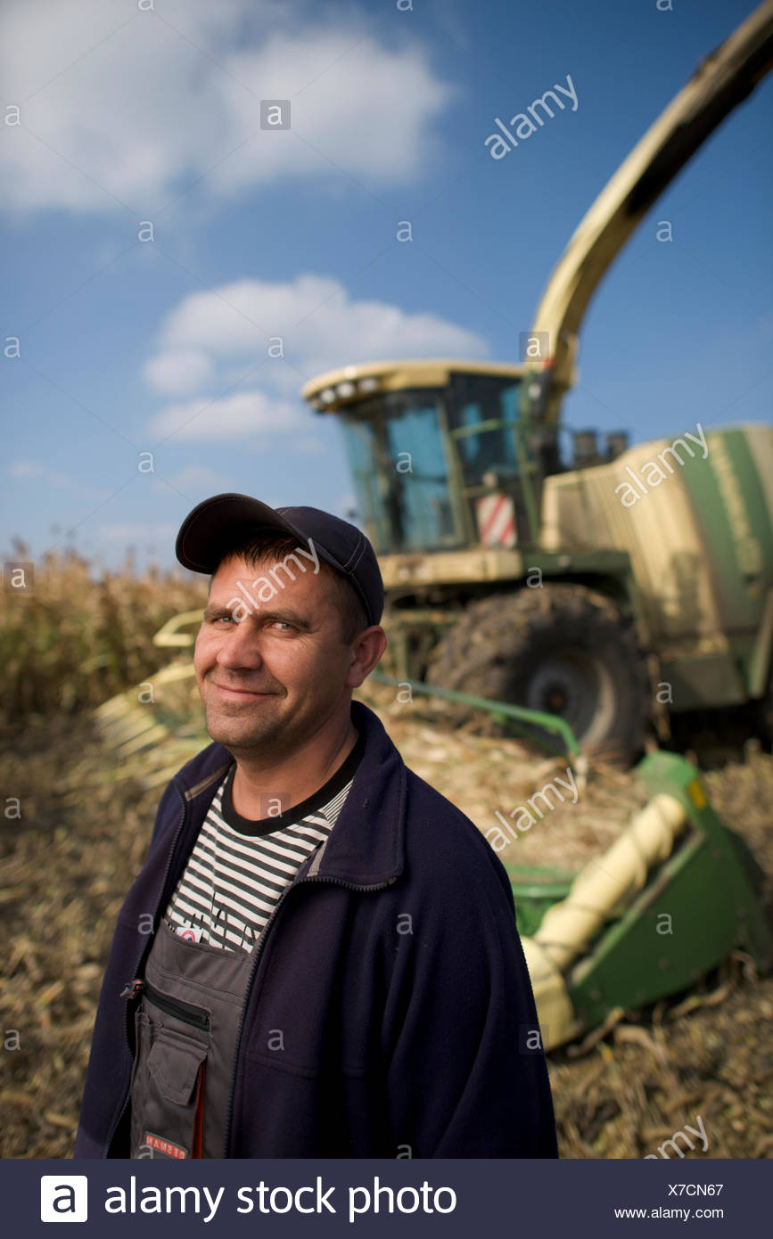 A farmer cuts milo for silage on a farm in Dnipropetrovsk Province. - Stock Image