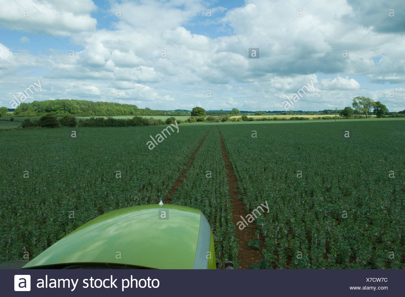 Tractor driving through wheat field - Stock Image