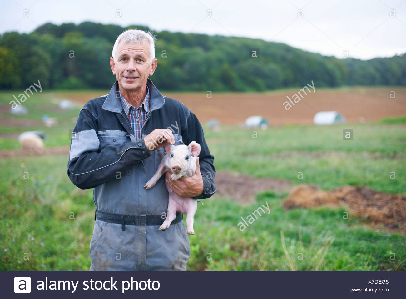 Farmer holding piglet in field - Stock Image
