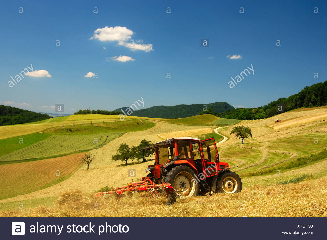 Tractor making hay on meadows in the Swiss Central Plateau, canton of Aargau, Switzerland, Europe - Stock Image