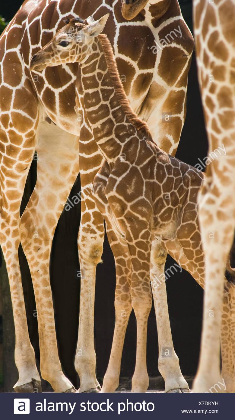 animal mammal animals - Stock Image