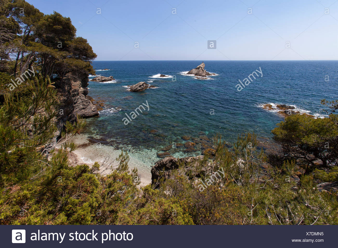 Conifer - Mediterranean Sea Var 83 - Stock Image