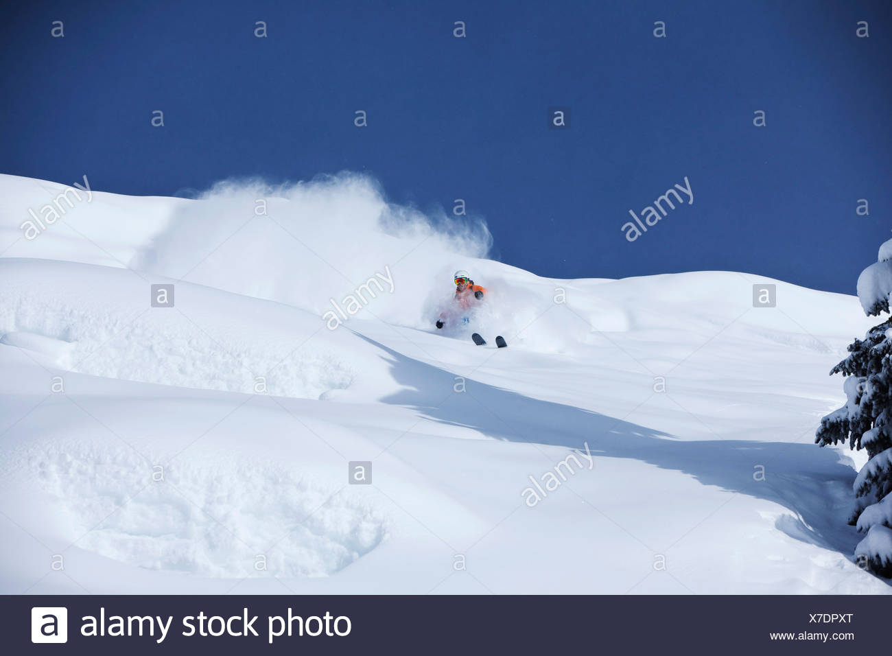 A athletic skier rips fresh deep powder turns in the backcountry on a sunny day in Colorado. - Stock Image