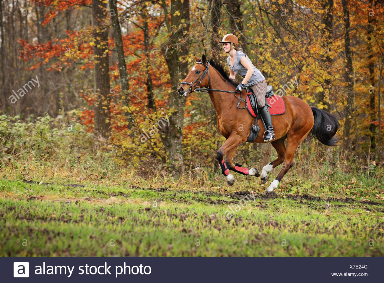 Woman Riding Horse In Forest Stock Photo Alamy