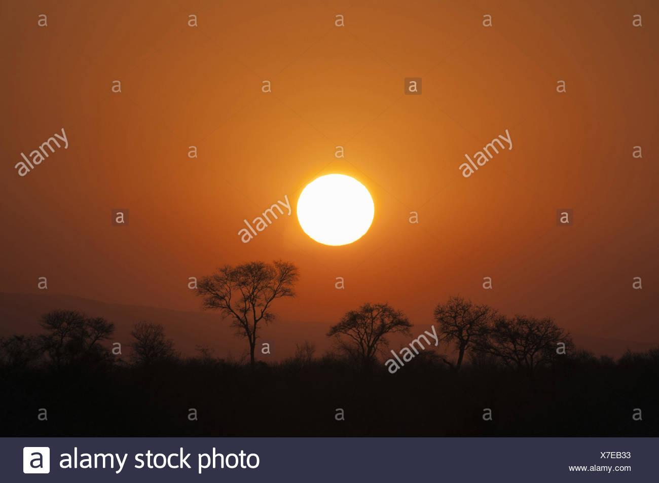 sunset in Krueger National Park, South Africa, Krueger National Park - Stock Image