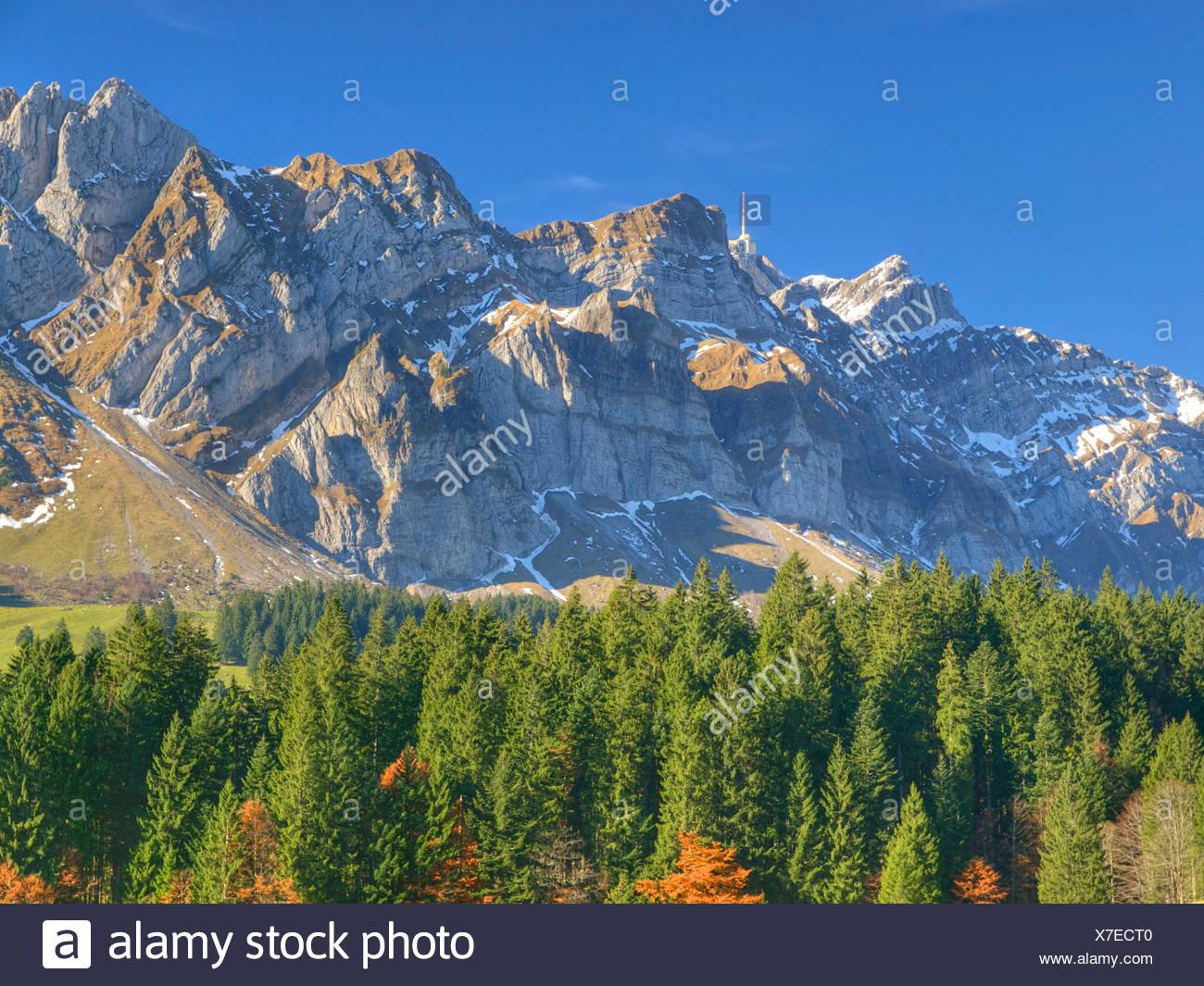 Appenzell, Switzerland, Europe, Säntis, firs, wood - Stock Image