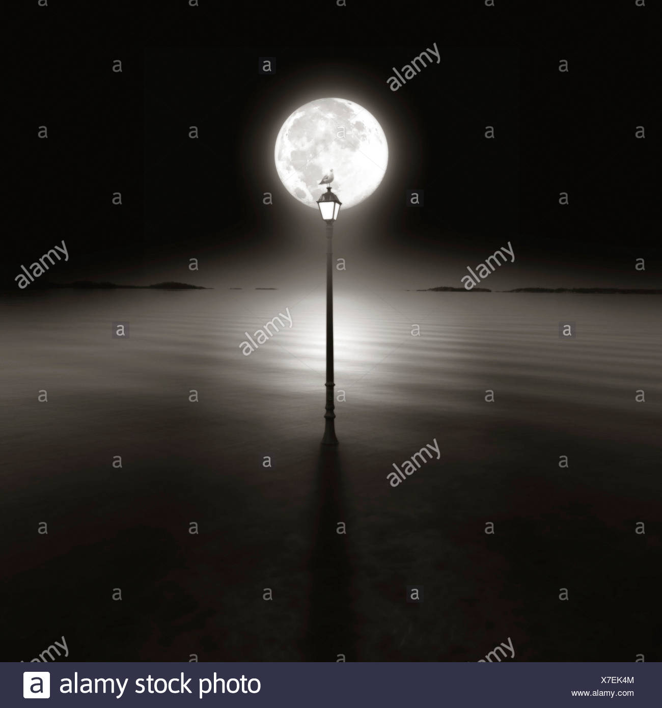 A seagull sitting on top of a lamp post at night silhouetted by the moon - Stock Image