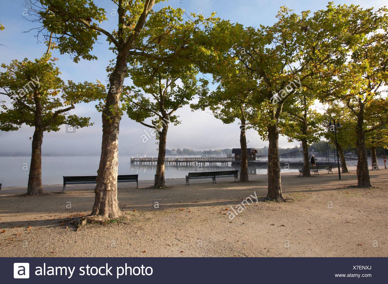 Trees at Woerthersee lake near Klagenfurt, Carinthia, Austria Stock Photo