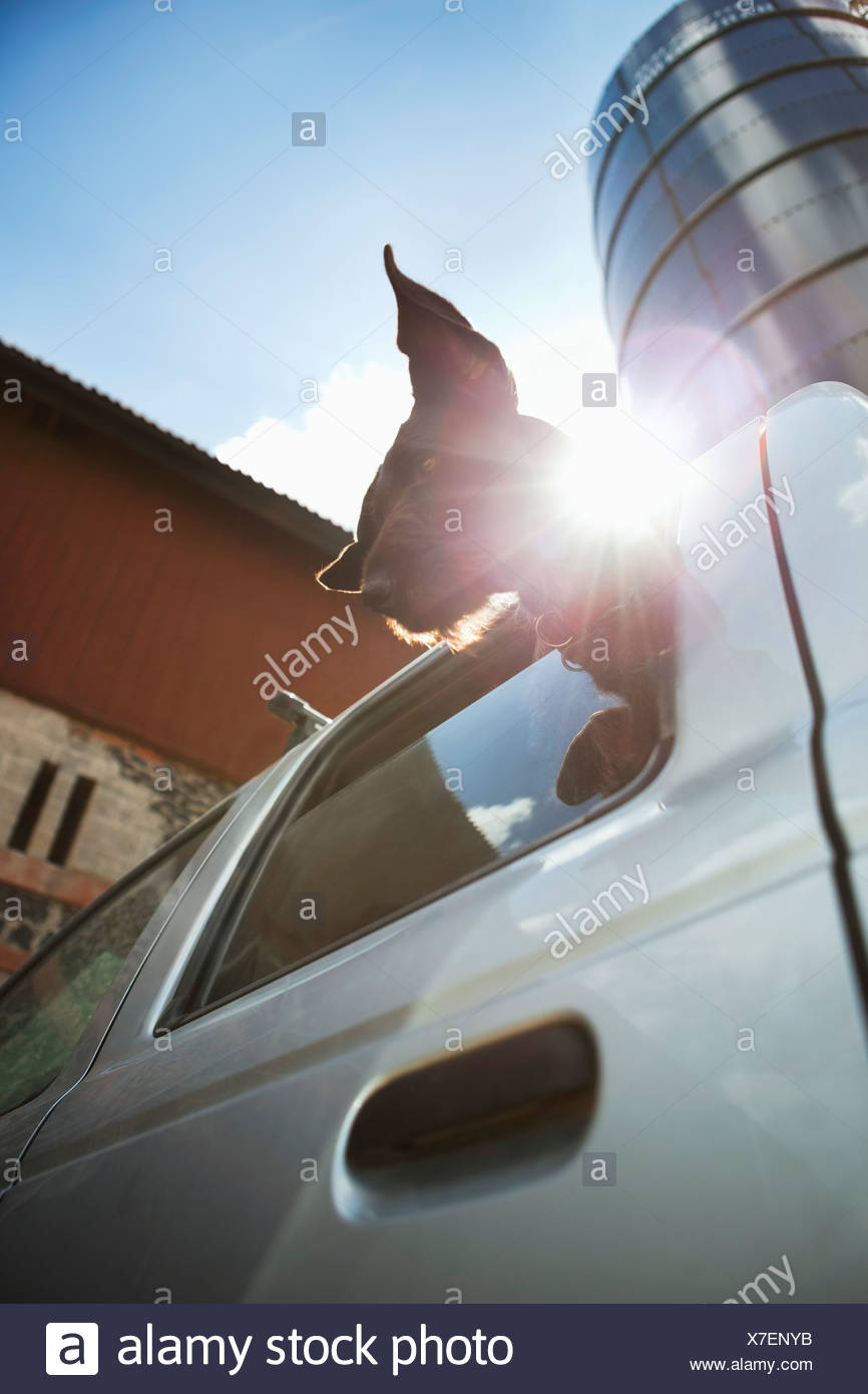 Low angle view of dog looking out from window - Stock Image