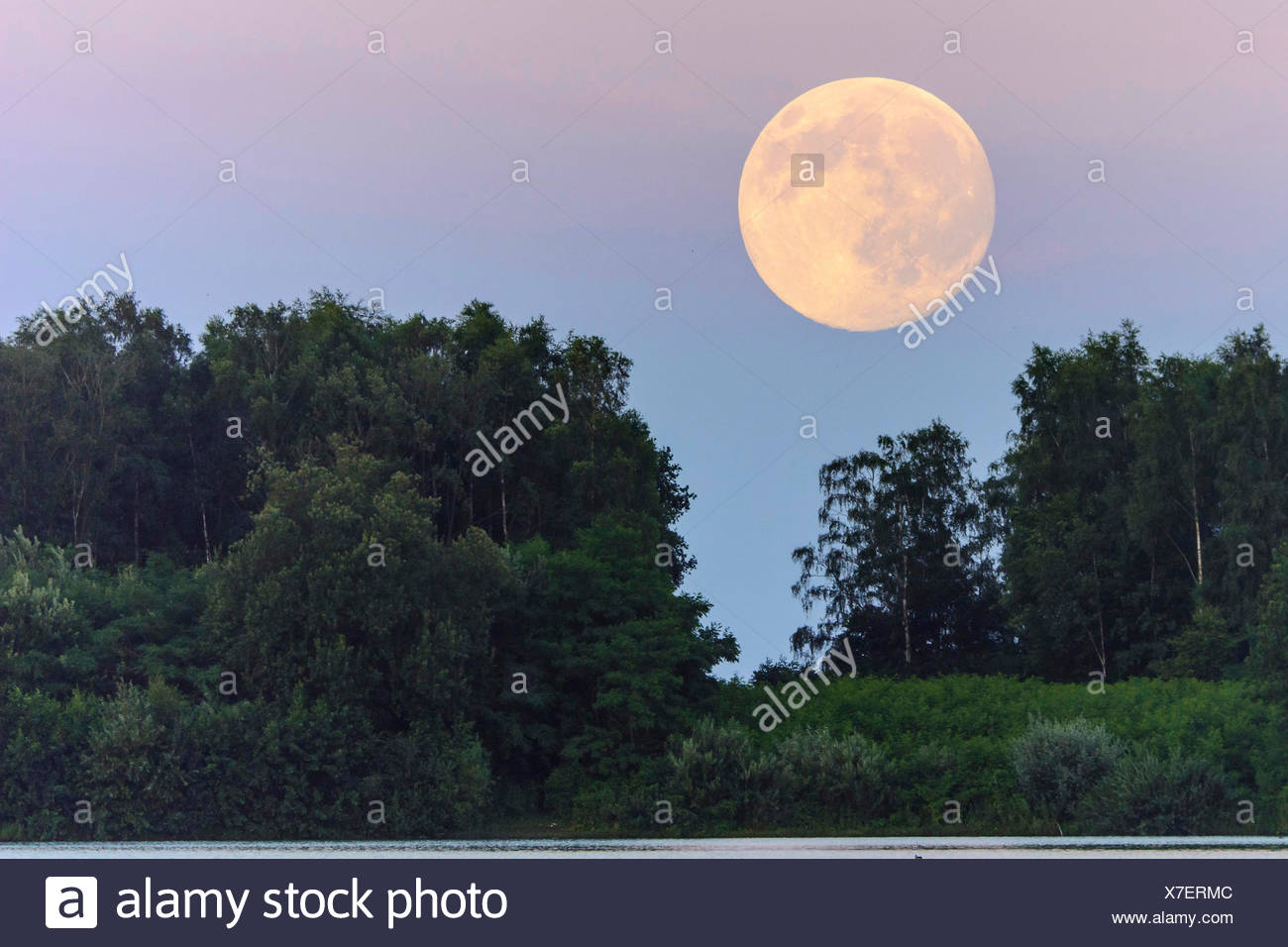 Vollmond ueber dem Dammer Bergsee, Deutschland, Niedersachsen, Damme | full moon over forest, Germany, Lower Saxony, Damme | BLW - Stock Image
