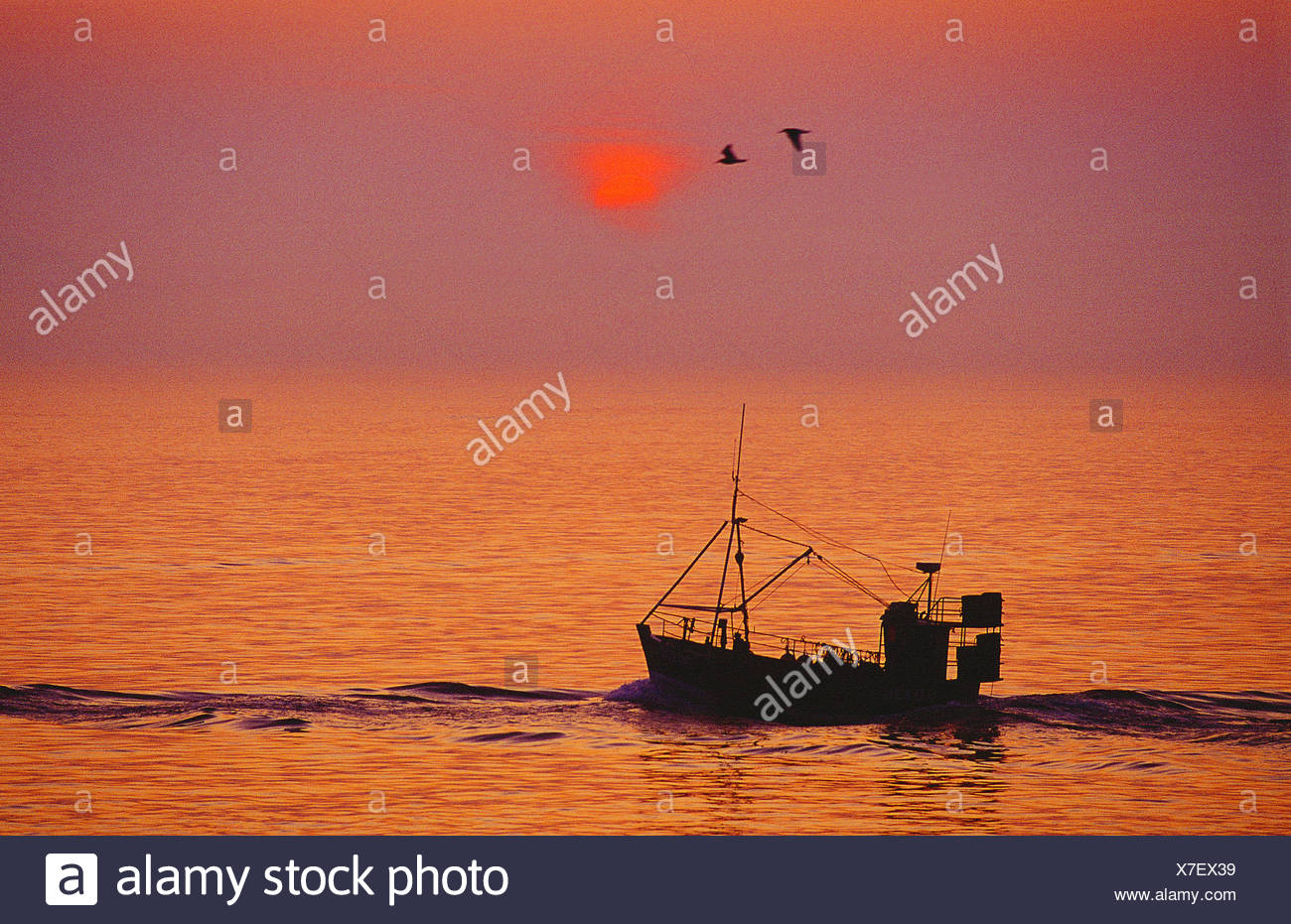 Small commercial fishing boat heading out to sea at sunrise. Channel Islands. Guernsey. - Stock Image