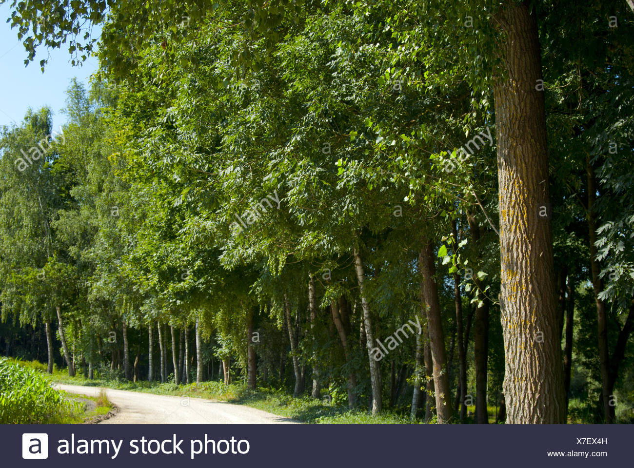 At the forest edge - Stock Image