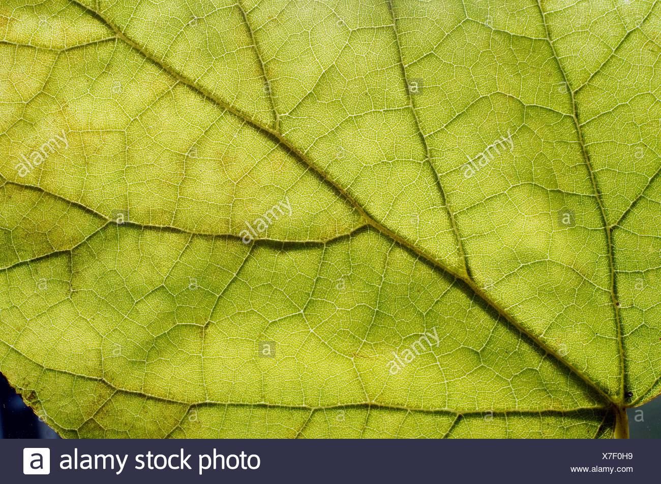 Leaf detail - Stock Image
