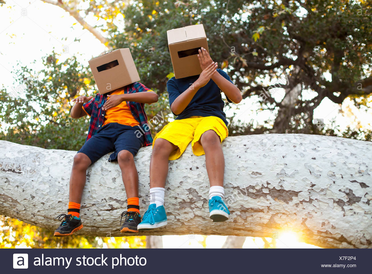 Two brothers sitting on park tree branch with cardboard boxes on heads - Stock Image