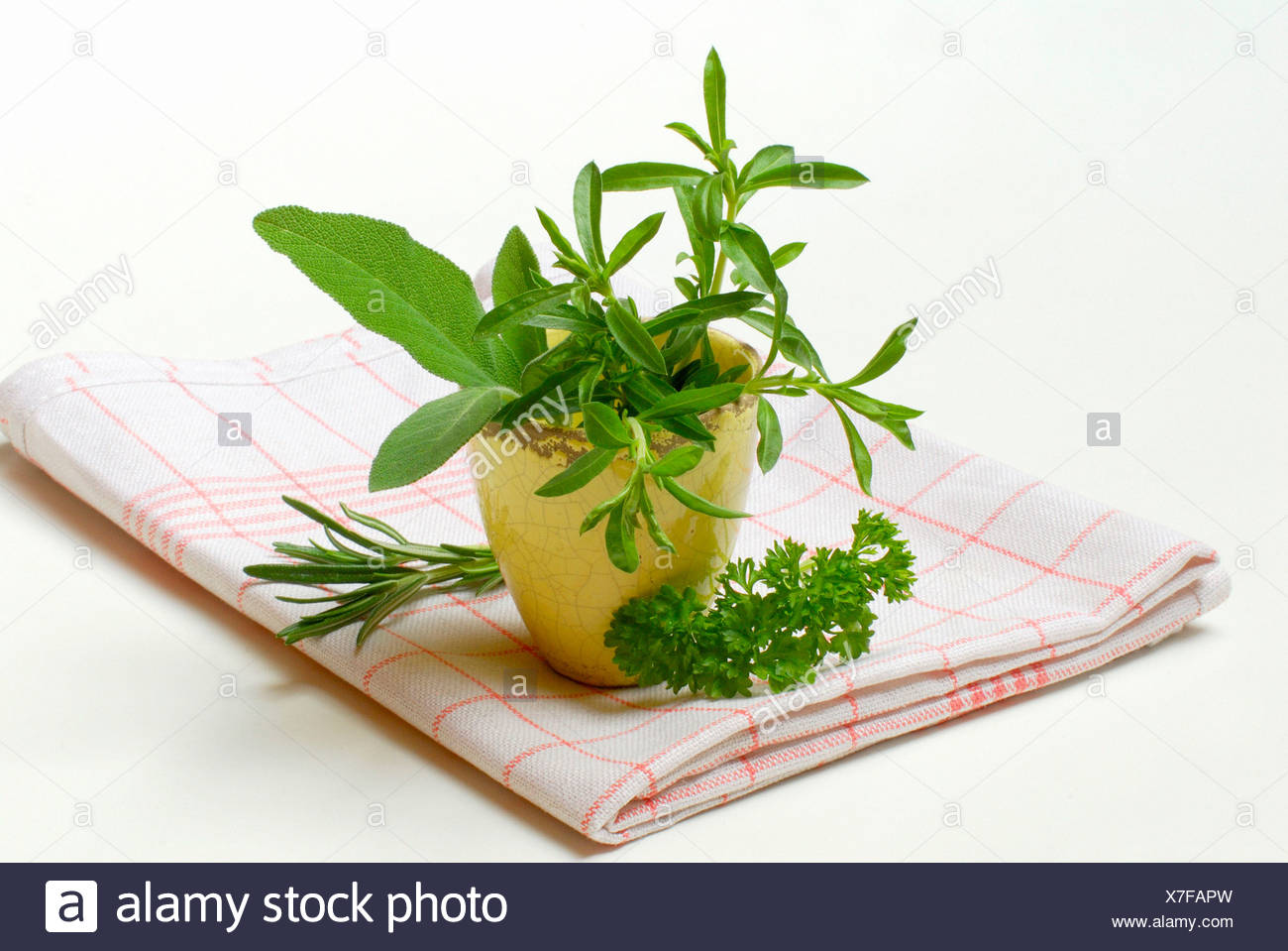 Summer Savory Stock Photo