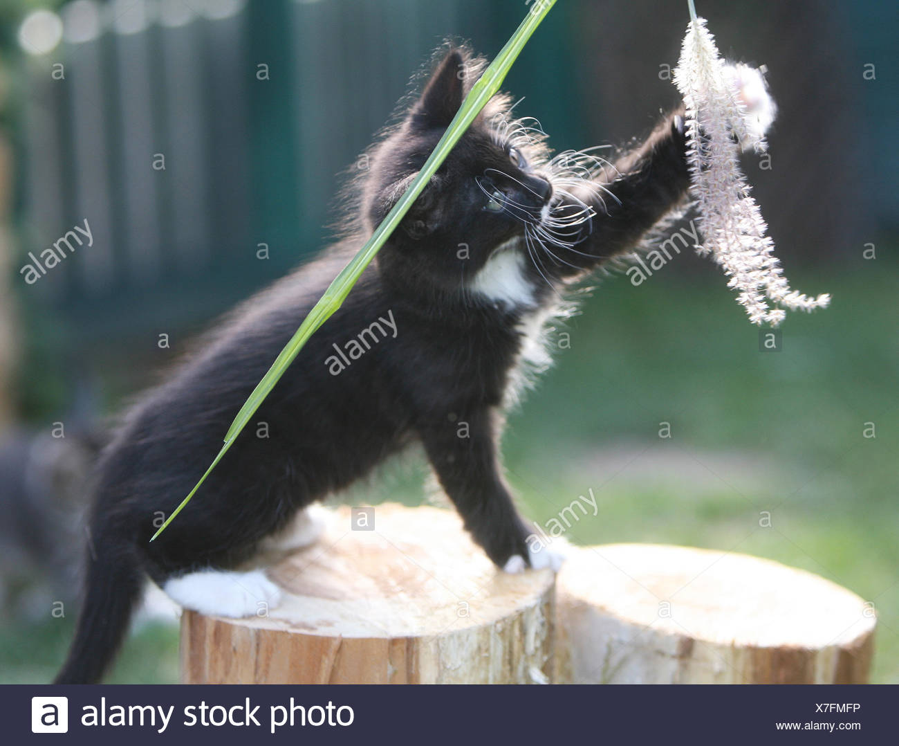 Young Kitten - Stock Image